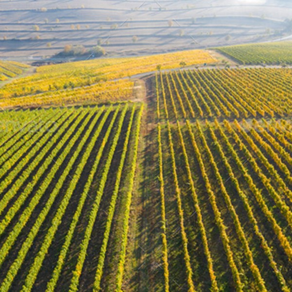 Sensors for drones can provide an active insight for vineyards